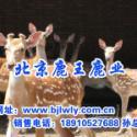 2012年贵州梅花鹿畜牧技师图片