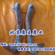 2012年天津梅花鹿肉批发图片