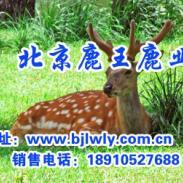 山西宁武县梅花鹿养殖效益图片