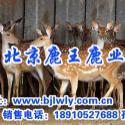 2012年长沙梅花鹿畜牧技师图片