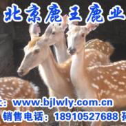 山西省榆社梅花鹿养殖基地图片