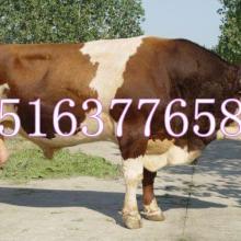 供应一头肉驴苗多少钱肉驴养殖场批发