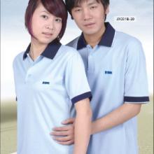 供应定制纯棉T-恤广告衫