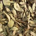 植物原药材铁包金图片
