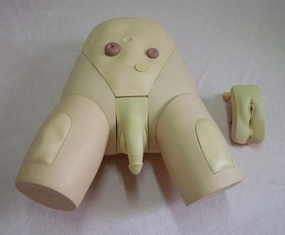 非洲象族男人生值器-上海男女导尿生殖器互换模型生产 价格: