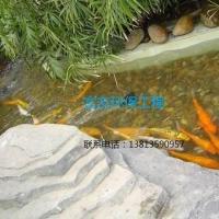 供应观赏鱼池的微生物净化系统技术,富友水处理