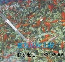 供应西安市专业处理鱼池水发绿青苔藻类问题,景观鱼池水处理水净化工程。批发