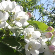 西安写字楼花卉出售咨询报价电话图片