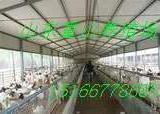 供应四川成都波尔山羊养殖繁殖种羊价格