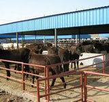 供应大型肉驴养殖场肉驴养殖肉驴价格