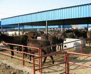 大型肉驴养殖场肉驴养殖肉驴价格图片