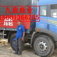 供应2011年梅花鹿的价格