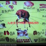 金钱鹿肉鹿肉礼盒鹿肉炖汤滋补养生