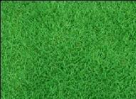 供应安徽草坪批发