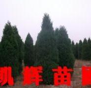 河南侩产地价图片