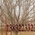 绿化果树图片
