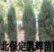 北京侩种植地图片