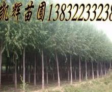 供应速生柳绿化树,美观树,好活。生长快。木质好!绿化苗木首选!