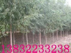供应馒头柳的价钱,1-8年生柳树,1-29厘米粗直径。大量提供树