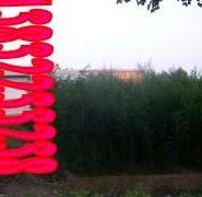 小榆树图片