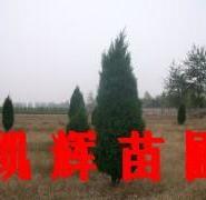 河南侩供应商图片