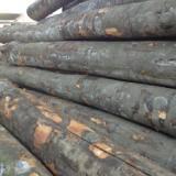 供应欧洲榉木原木 欧洲榉木原木家具材/线条材