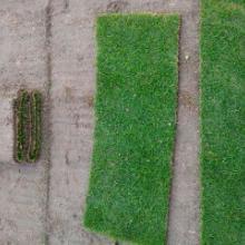 供应草坪草皮草坪草坪种植基地批发