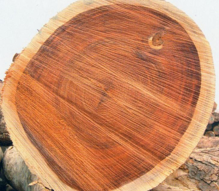 原木进口报关,广东红木木材进口报关报续代理公司
