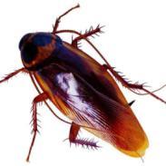 灭蟑螂服务公司图片