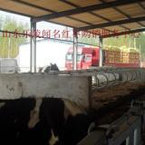 供应优质牛羊用饲料枣