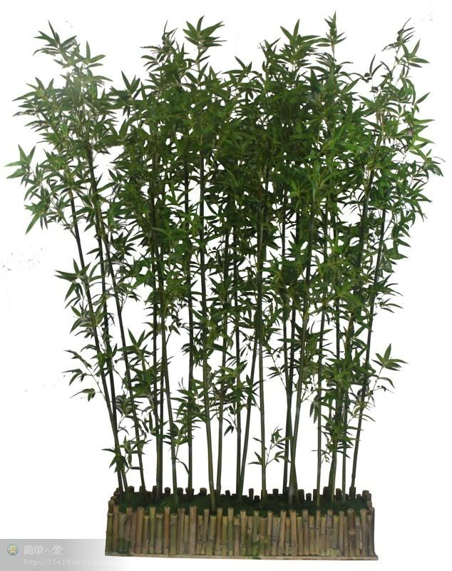 - Plantas altas de exterior ...