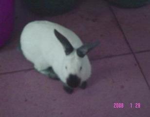 八点黑兔图片