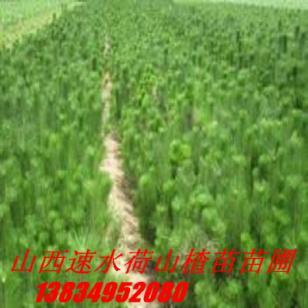 苗圃蜀侩图片