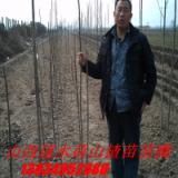 供应苗木种子,苗木种子批发,优质苗木种子批发