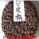 供应优质各种油松籽白皮松籽,优质各种油松籽白皮松籽批发商