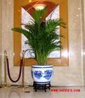 供应北京花卉租赁