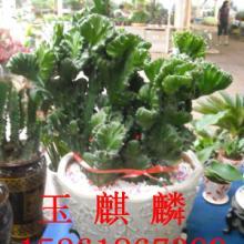 供应植物租赁的优势