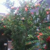 供应果树种植基地