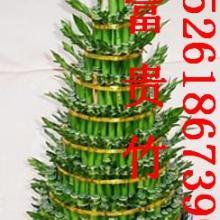 供应承接南京市区绿植租摆绿化管理批发