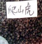 供应爬山虎种子,香泡种子,巴西豆种子批发