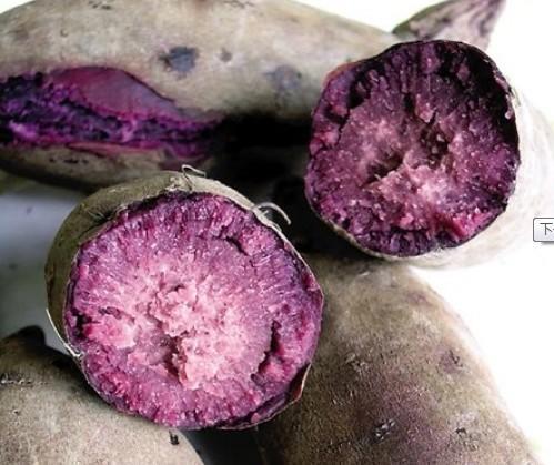 补血薯 - 第1张  | 中草药图片大全-中药的功效与作用