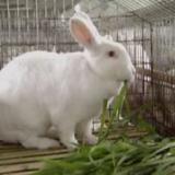 供应山东獭兔的最低价格