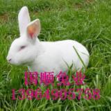 供应平顶山獭兔