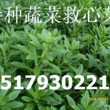 供应保健蔬菜种子种苗 特色蔬菜 保健蔬菜 特种种植批发