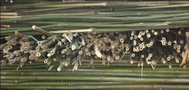 供应2米竹竿,3米竹竿批发,4米竹竿报价,5米竹竿供应商,6米竹竿厂