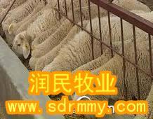 供应到那买小尾寒羊/小尾寒羊养殖场批发