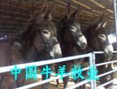 供应种驴肉驴关中驴乌头驴图片