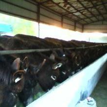 供应肉驴,种驴,驴苗,山东最著名的肉驴养殖场厂家报价及图片批发