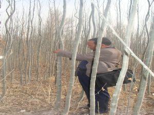 西藏那曲新疆杨