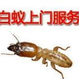 供应上海佳庆实业有限公司021-54303723灭白蚁公司